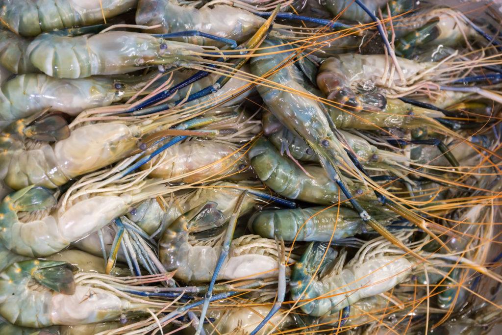 sustainable fishing practices in australia