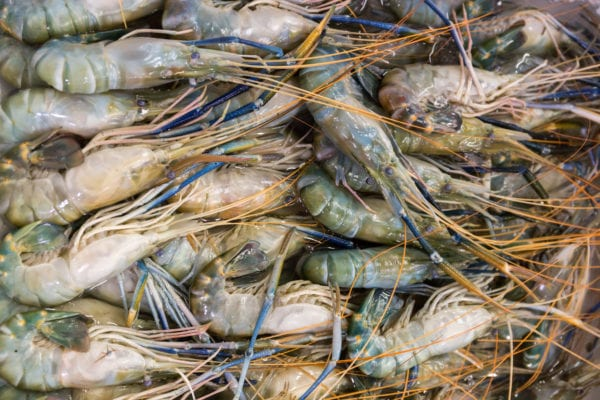Raw shrimps for sale on the market