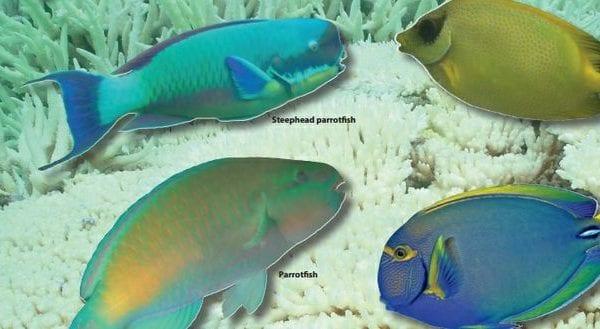 gla300417herbivorousfish2-nym28chm0e8iwx1m5o2_t620