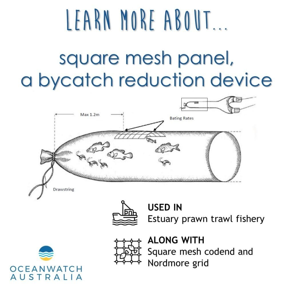 The square mesh panel is a bycatch reduction device used whilst estuary prawn trawling. This device is constructed from a panel of square mesh that is specifically designed to exclude smaller fish from the catch.