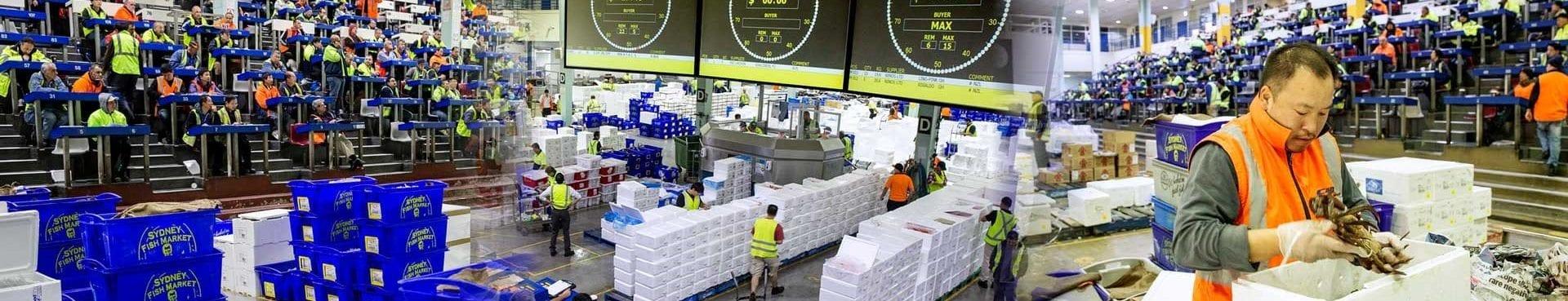 Sydney-Fish-Market-_Auction-e1610683199796