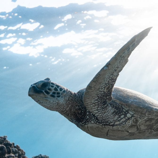 photo-of-sea-turtle-2765872
